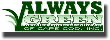 go to Always Green of Cape Cod's Website